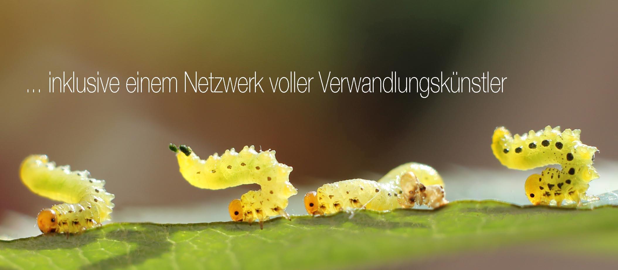 Netzwerkpartner